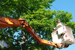 tree pruning Tandragee