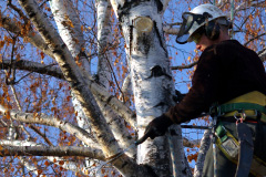 Tandragee tree pruning costs